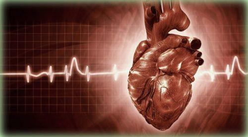 szív és szívritmus